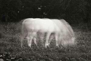 """""""White Horse in Moonlight,"""" 1984"""