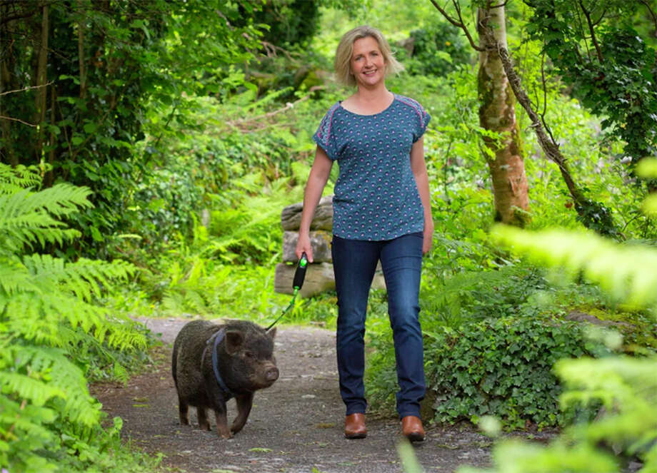 Want to take a pig for a walk in the woods? That experience is available in Ireland from Airbnb's new animal adventures. Photo: Airbnb