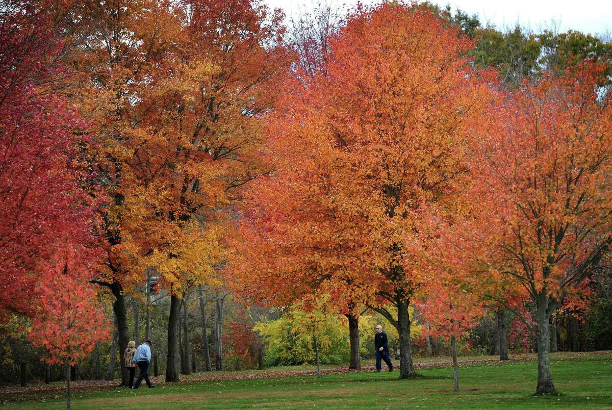 Fall foliage at peak color draws large numbers of walkers to Twin Brooks Park in Trumbull on Oct. 29, 2014.