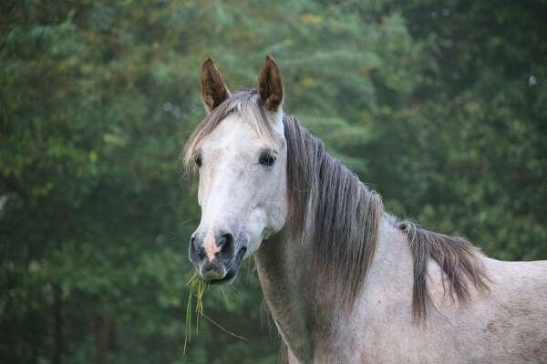 Dr. Jeffrey Watkins, a professor at the Texas A&M College of Veterinary Medicine & Biomedical Sciences, provides insight into equine osteoarthritis and how owners might manage this condition in their horses.