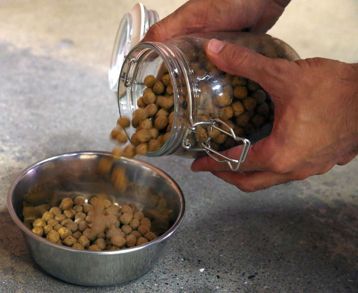 Ryan Bethencourt, CEO of Wild Earth, prepares a bowl of kibble for his foster dog Roscoe at the vegan dog food company's headquarters in Berkeley, Calif. on Friday, Oct. 4, 2019.