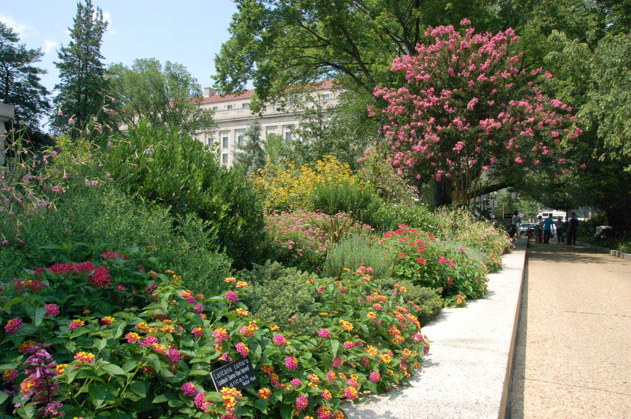 Help butterflies, bees and birds with a pollinator garden in your yard