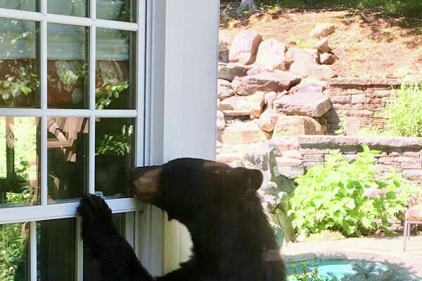 In this July 18, 2018 photo provided by Julie Sonlin, a black bear explores the yard of Steve and Julie Sonlin in Avon.