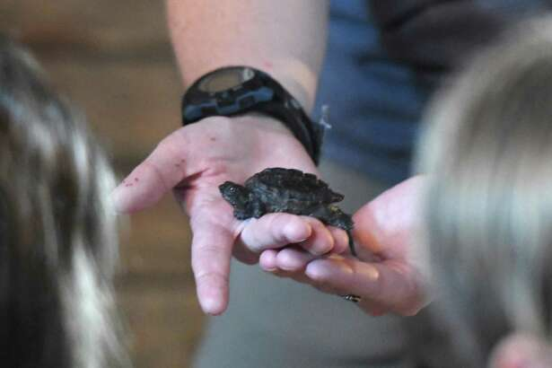 Riverside Reptiles Creepy Show is on Oct. 12 at 2 p.m. at the Wilton Library, 137 Old Ridgefield Road, Wilton. Kids preschool and up watch and hear about various reptiles, amphibians and arachnids. Registration is required. Registration/Info: 203-762-6336, wiltonlibrary.org.