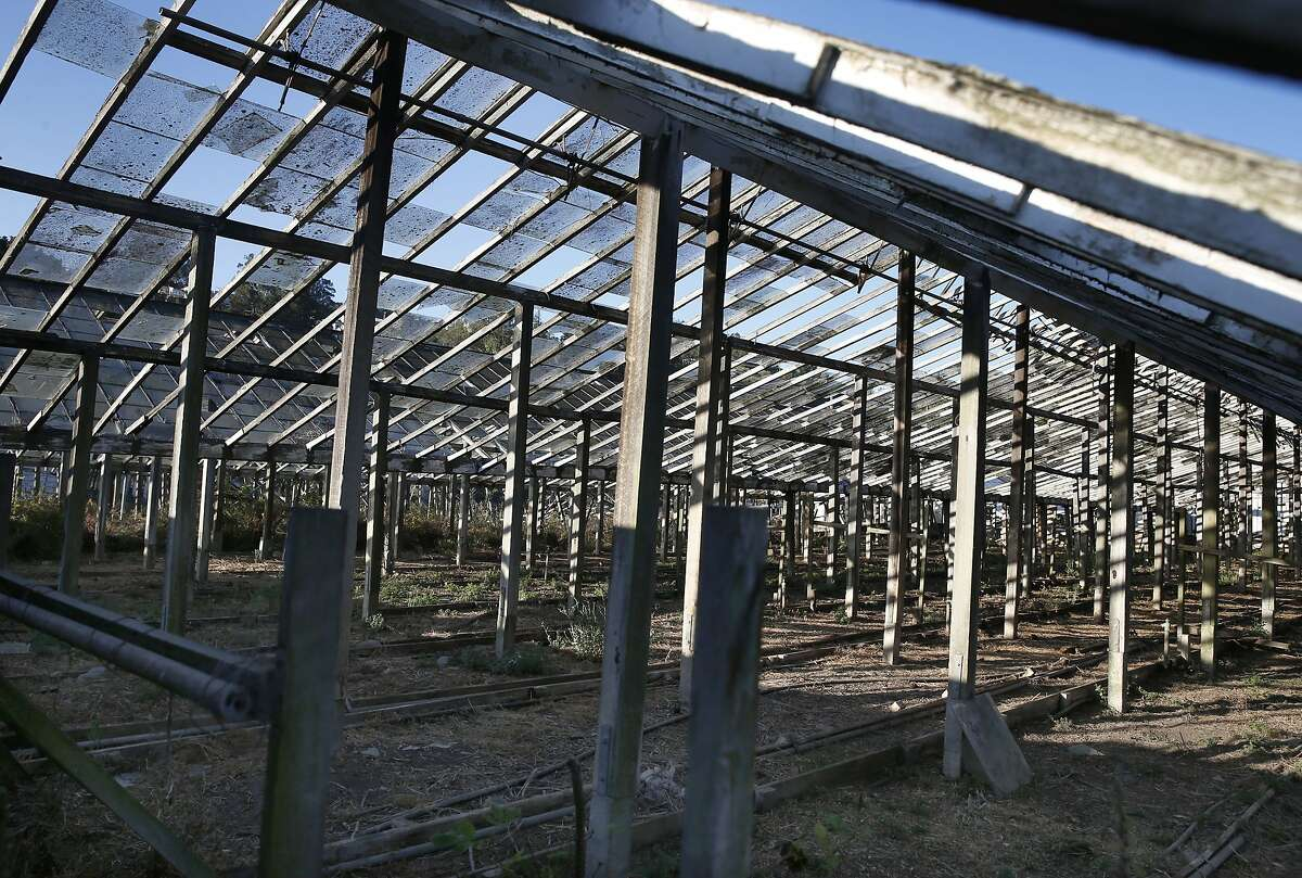 Most of the glass panels are broken or missing from decaying greenhouses in the Portola district of San Francisco. The greenhouses have fallen into disrepair since the business using them shut down in 1992.