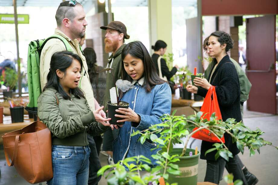 Visitors at the SF Botanical Gardens' 2018 Plant Sale. Another Fall Plant Sale is taking place on Oct. 12 and 13 at the SF County Fair Building. Photo: Travis Lange