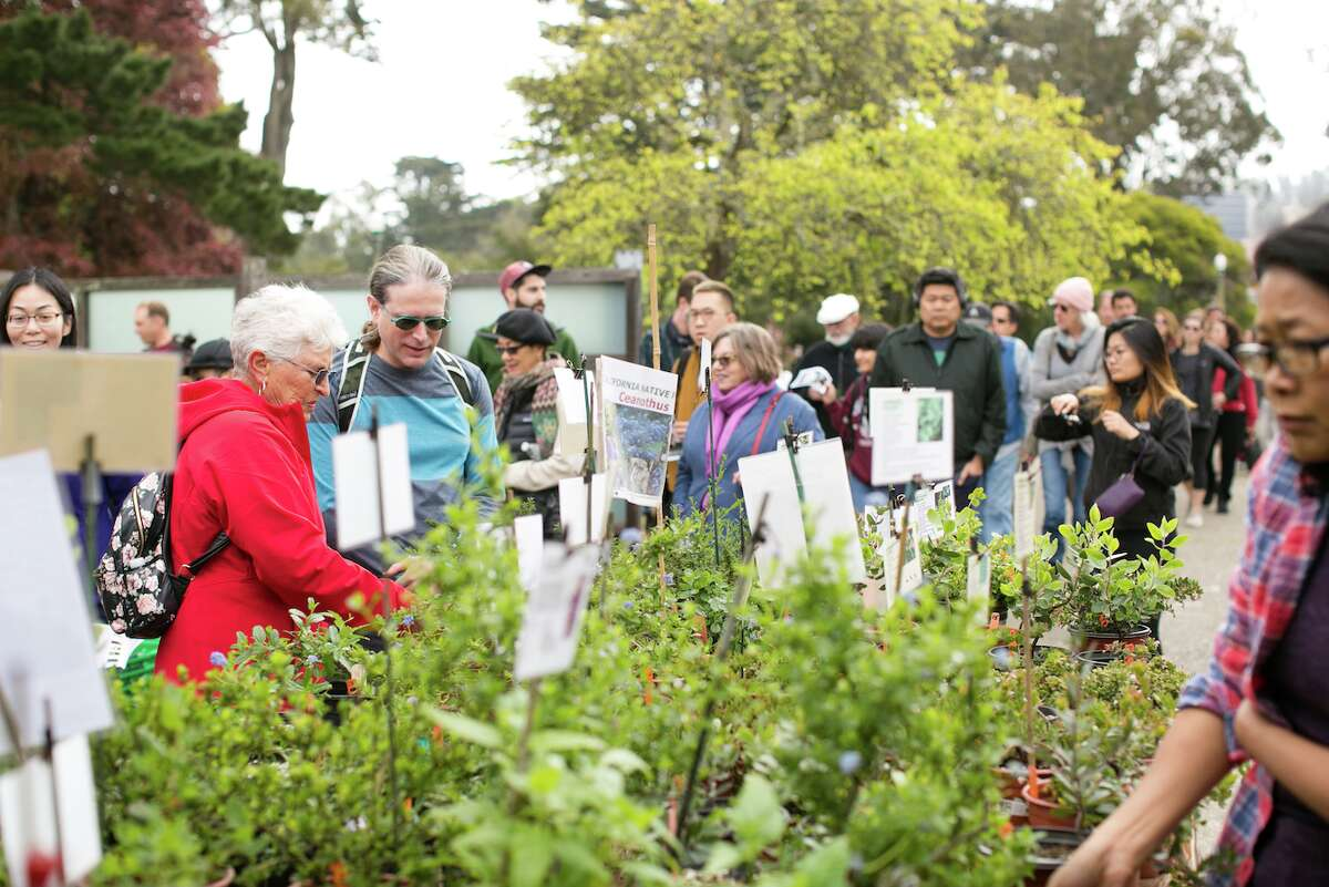 Visitors at the SF Botanical Gardens' 2018 Plant Sale. Alarm ensued last weekend when word spread that the garden's nursery would be demolished.