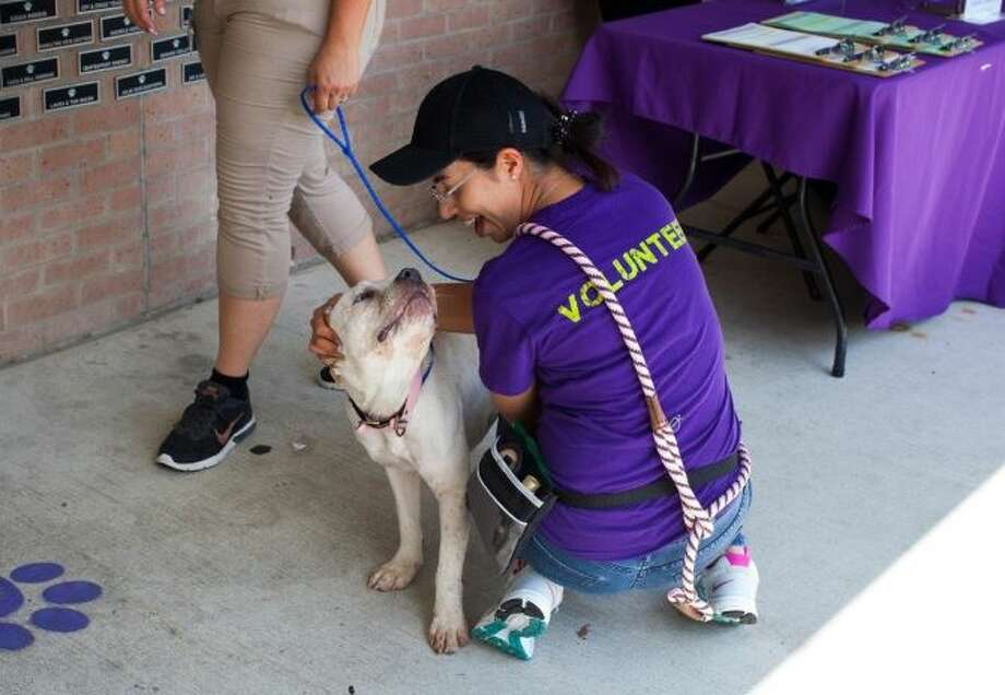 BARC Animal Shelter's release rate hit a record number in September, with 87.5 percent of its dogs and cats finding homes or caretakers.>>>See more BARC pets... Photo: City Of Houston/BARC