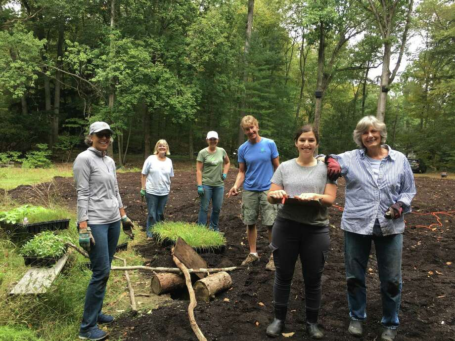 More than 20 volunteers helped the New Canaan Land Trust plant a brand-new meadow at the Silvermine-Fowler last week. Photo: Contributed Photo.