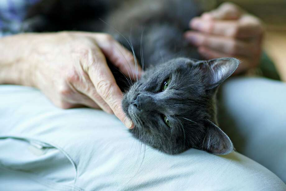 A soothing touch brings comfort to a sick cat. Photo: Dreamstime