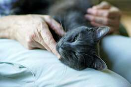 A soothing touch brings comfort to a sick cat.
