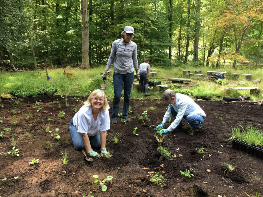 Volunteers helped the New Canaan Land Trust work to establish a new meadow at Silvermine-Fowler Preserve. Photo: Contributed Photo.