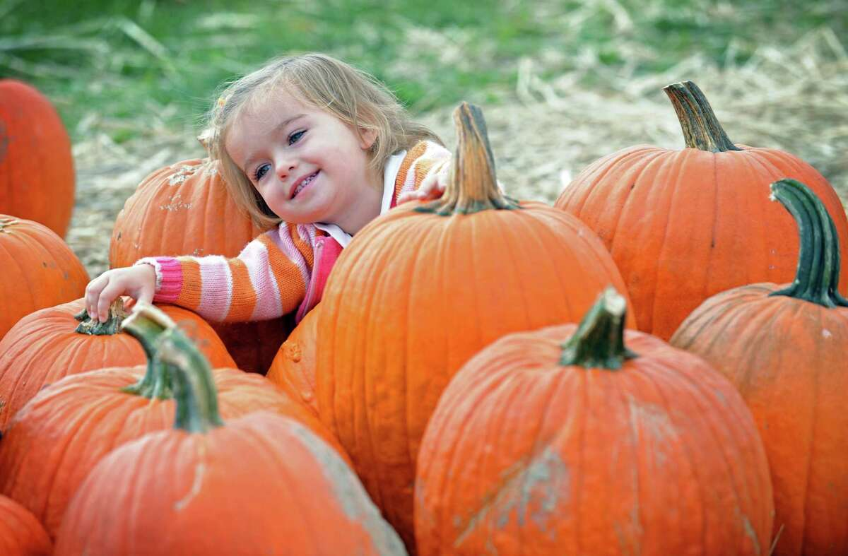 Two-year-old Larissa Niejelow, of Stratford, sits among the pumpkins during the Jones Family Farms UNICEF Family Festival Saturday, Oct. 22, 2011 at Pumpkinseed Hill farm at 120 Beardsley Road in Shelton, Conn. The event continues Sunday, from 10am - 4pm with Magician Bryan Lizotte performing at 11:30am. Story Time will take place on the stage with nautical tales being read to the kids and farmers from the Harvest Kitchen cooking studio will be doing cooking demos.