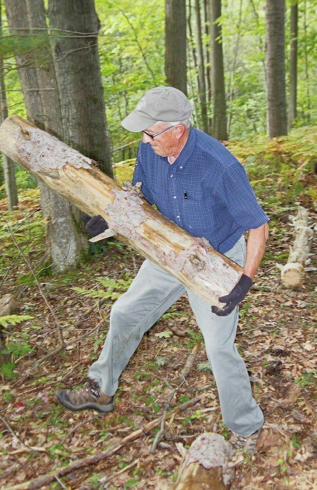 Nature center board member, Tom Beachy, helps clear fallen logs from the new trail system at the Huron County Nature Center. (Bill Diller/For the Tribune)