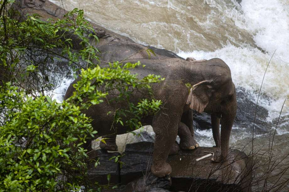 EDITORS NOTE: Graphic content / This photo by Thai News Pix taken on October 5, 2019 shows two elephants (one behind the other) trapped on a small cliff at a waterfall at Khao Yai National Park in central Thailand as rescuers work to save them. - At least six wild elephants drowned after tumbling down a waterfall in the Thai national park, authorities said on October 5, as rescuers worked through the night to save two of the animals on the brink of the same fateful plunge. (Photo by PANUPONG CHANGCHAI / THAI NEWS PIX / AFP) (Photo by PANUPONG CHANGCHAI/THAI NEWS PIX/AFP via Getty Images) Photo: PANUPONG CHANGCHAI/THAI NEWS PIX/AFP Via Getty Imag