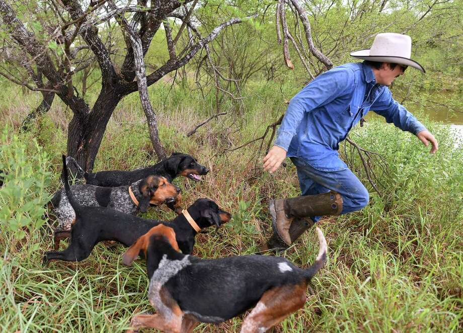 Gilbert Rosales of Texas Canine Tracking and Recovery, is chased by a pack of hounds being trained to track humans. Dogs trained by the company are helping prevent the illegal poaching of rhinos in South Africa. / San Antonio Express-News