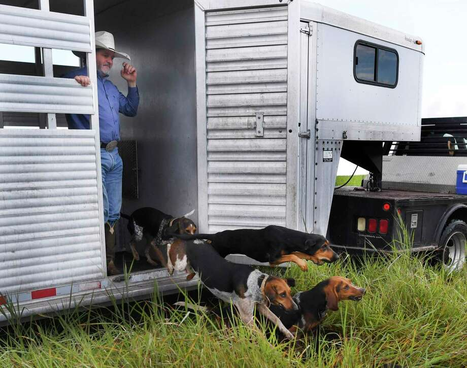 Joe Braman of Texas Canine Tracking and Recovery watches as a pack of dogs runs from a trailer to chase down a human decoy during a training exercise. The facility has sent trained dogs to South Africa to help in the fight against rhino poaching. / San Antonio Express-News