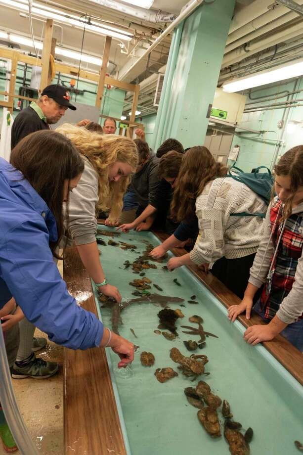 Families will have a chance to learn about shellfish and their role in the ecology of Long Island Sound at the National Oceanic and Atmospheric Administration (NOAA) Fisheries Milford Laboratory during its annual open house on Saturday, Oct. 19. Photo: Photo By George Sennefelder (NOAA Fisheries).
