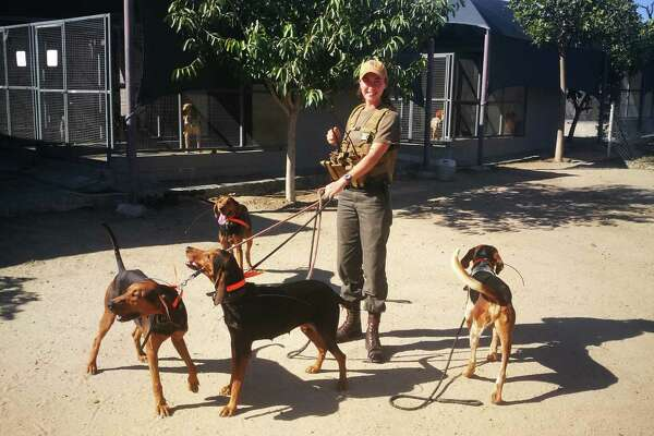 Robynne Wasas, deployment manager and K9 trainer for Southern African Wildlife College, poses with a pack of four Texas coonhounds at the SAWC kennels.