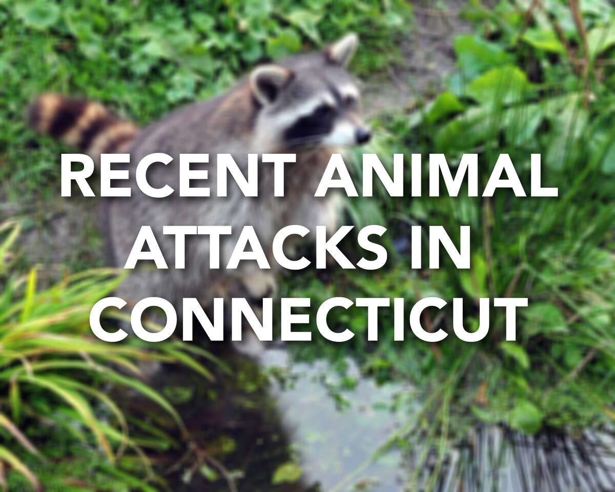 Continue ahead for a look at recent animal attacks and other animal-related news in Connecticut.