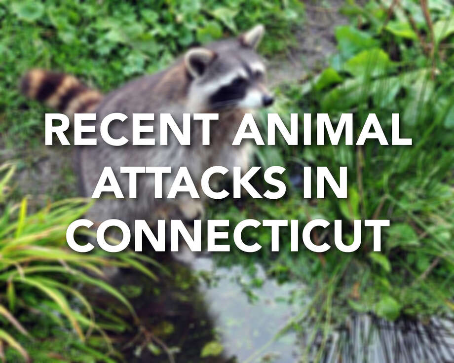 Continue ahead for a look at recent animal attacks and other animal-related news in Connecticut. Photo: Contributed