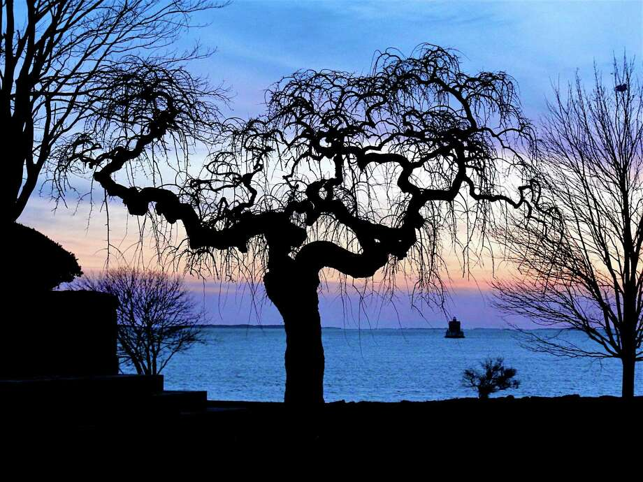 Gnarly Tree, digital print Marcus Maronn Photo: Contributed Photo