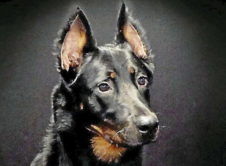 29 westminster dog show