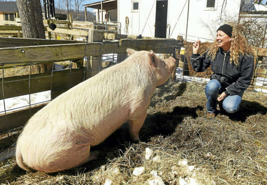 Children's book author Kathleen Schurman with her pet pig Petunia Buttercup at her Bethany farm, March 22, 2017. Schurman has written a farm adventure mystery book starring her late pet pig, Ozzie.