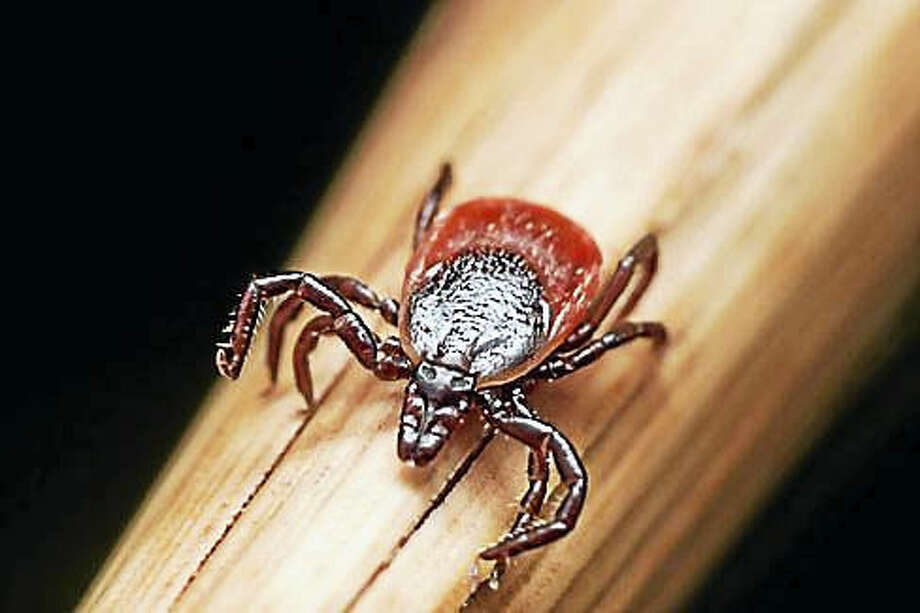 A deer tick sits on a piece of straw.