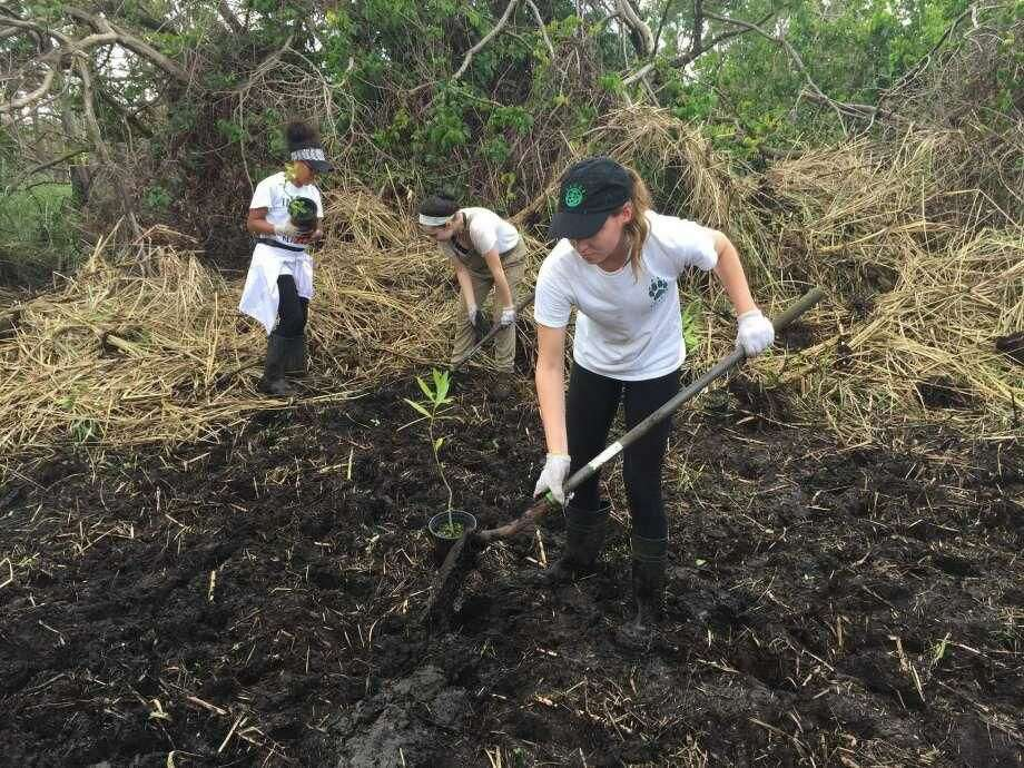 Quinnipiac University students (from left) Deisha Quiñones, Amada Pullano and Alexis Ferrara planting mangroves in Cataño, Puerto Rico where Hurricane Maria devastated the habitat in September.