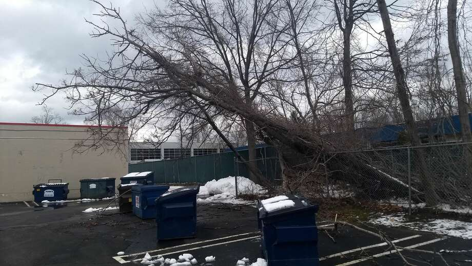 A fallen tree in the back of the Cherry St. Plaza in Milford on Thursday.