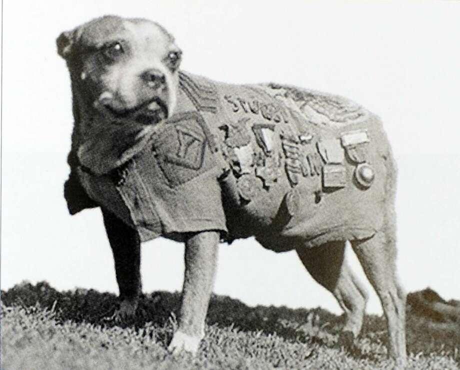 Stubby the World War I hero dog, Yale University football mascot.