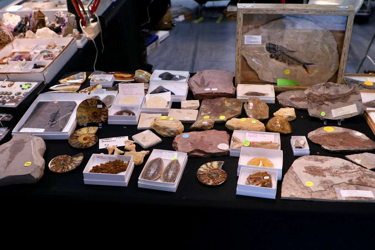 Some of the fossils available at the New Haven Mineral Club show included fish, ferns, shark teeth and footprints.