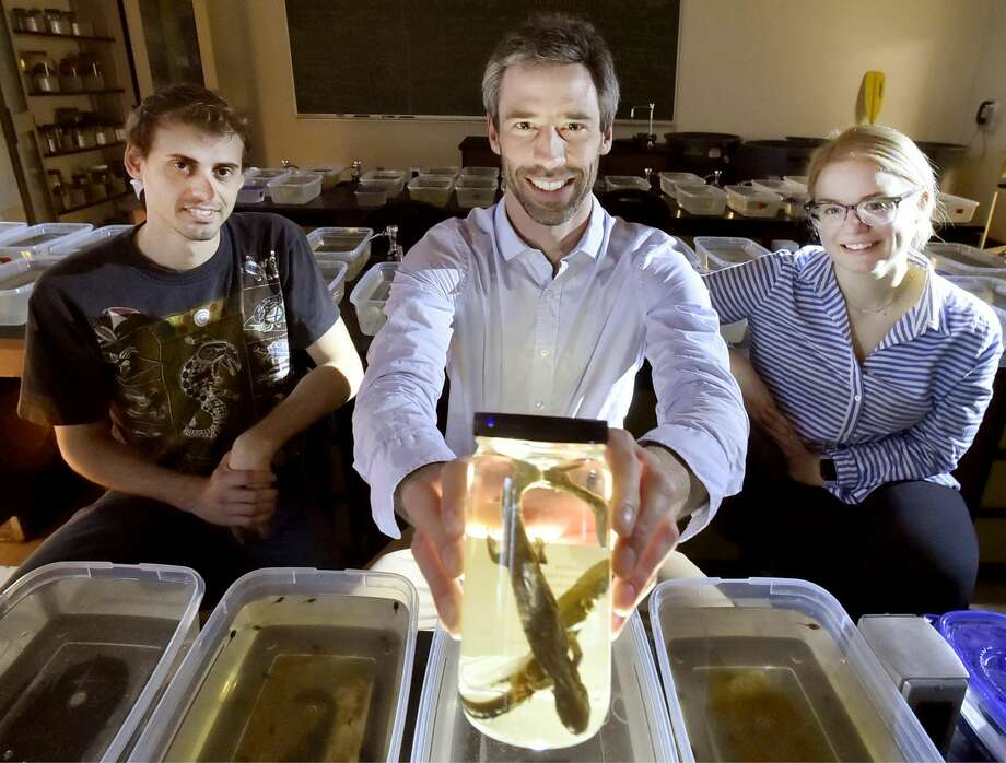 Southern Connecticut State University professor Steven Brady shows a preserved spotted salamander, with students Faruk Senturk, left, and Lauren Frymus.