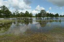 Heavy flooding fills land running along FM 326 in Sour Lake. Photo taken Monday, September 23, 2019 Kim Brent/The Enterprise