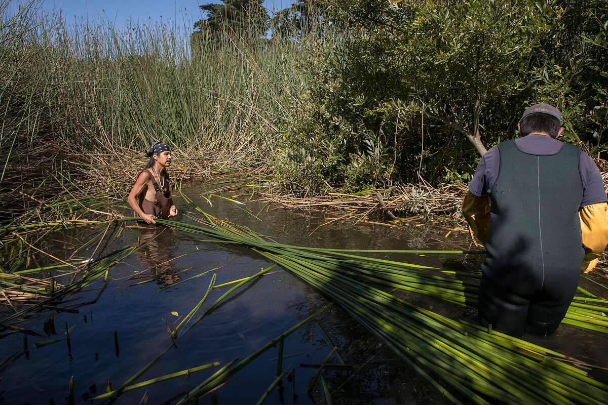 Antonio Moreno, an Ohlone Indian, harvests tule reeds from Mountain Lake with the help of the Presidio Trust intern Gabriel Garcia, to build a traditional Ohlone boat in San Francisco, Calif., on Wednesday, September 25, 2019. He and other members of the tribe will paddle to Alcatraz Island on Indigenous Peoples' Day to commemorate the occupation of the island by local Indian tribes in 1969.