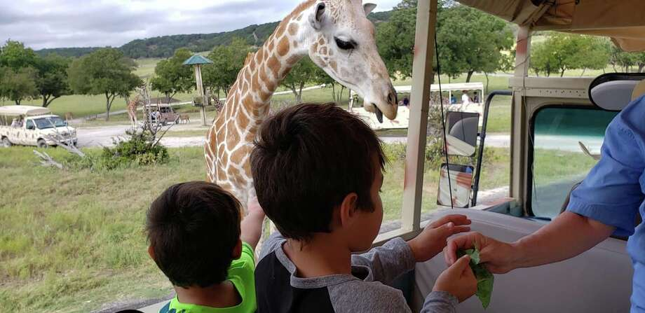 Families of students who attend West Texas Home School Co-Op took a trip earlier this month to Fossil Rim Wildlife Center and Dinosaur Valley State Park in Glen Rose. Photo: Courtesy Photo