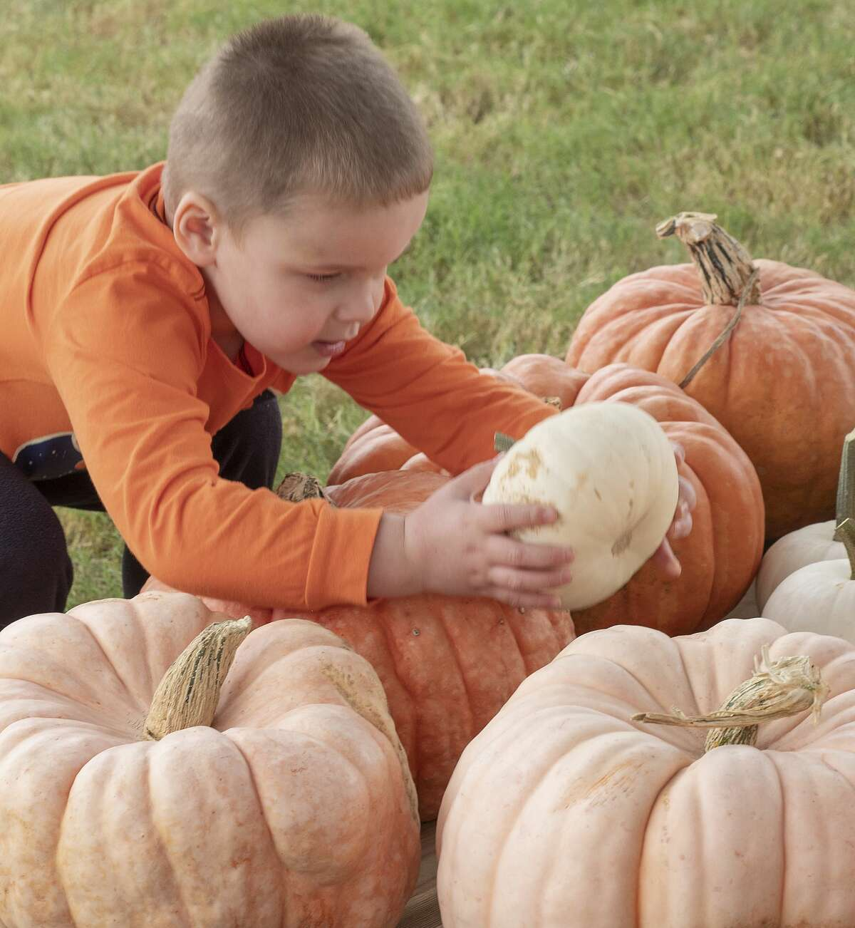 Jacob Pavelock, 3, picks out pumpkins as he and his family browse 10/12/19 at the St. Luke's United Methodist Pumpkin Patch. Tim Fischer/Reporter-Telegram