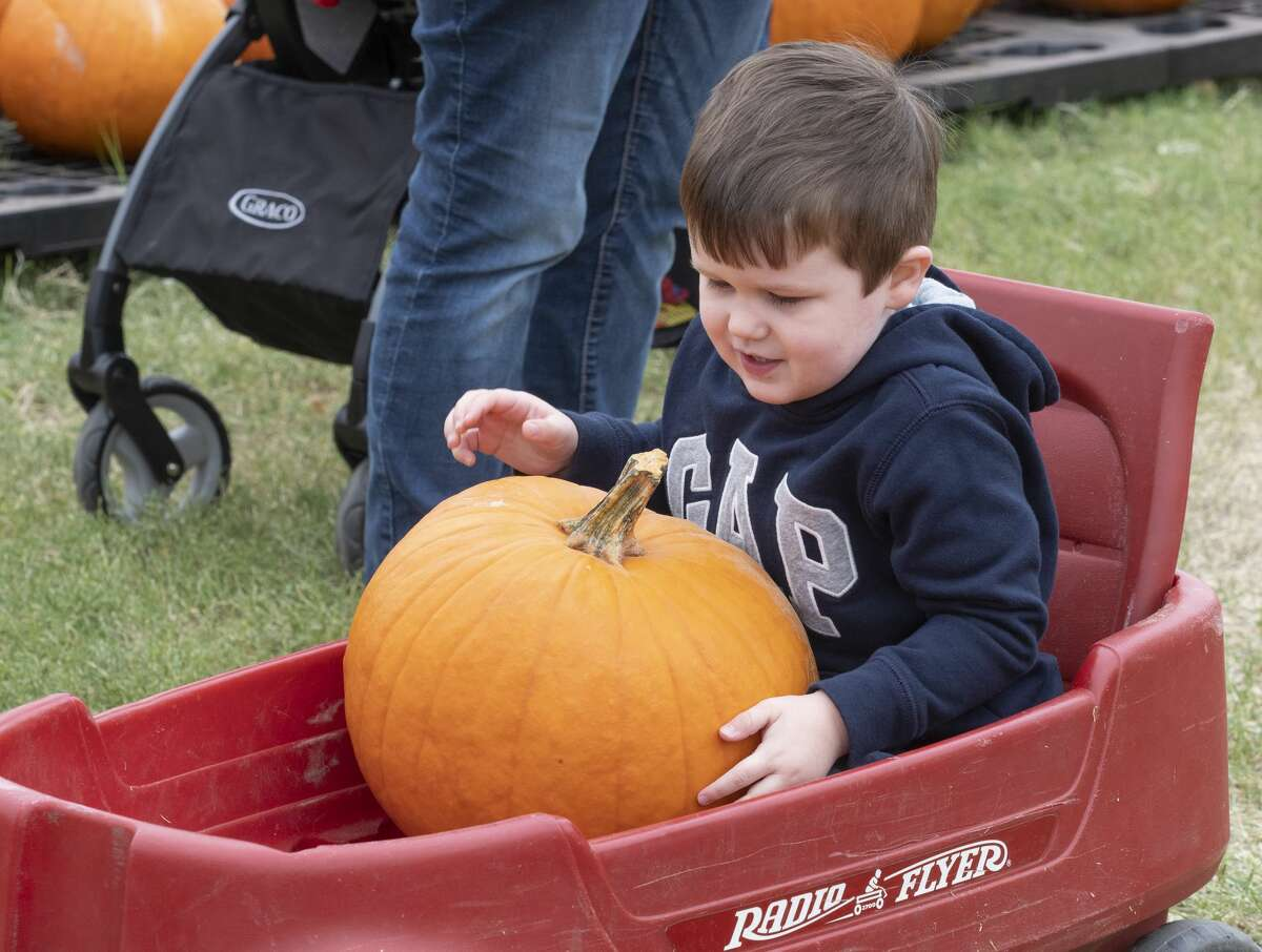 Jackson Thissen picks out pumpkins as he and his family browse 10/12/19 at the St. Luke's United Methodist Pumpkin Patch. Tim Fischer/Reporter-Telegram