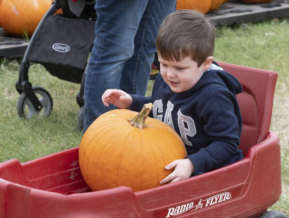 Jackson Thissen picks out pumpkins as he and his family browse 10/12/19 at the St. Luke's United Methodist Pumpkin Patch. Tim Fischer/Reporter-Telegram Photo: Tim Fischer/Midland Reporter-Telegram