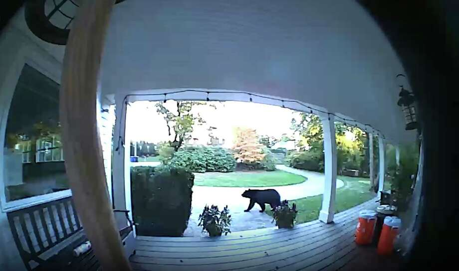 This bear was spotted going across a front yard on Shadow Lane Saturday afternoon. Photo: Ring.com / Contributed Photo