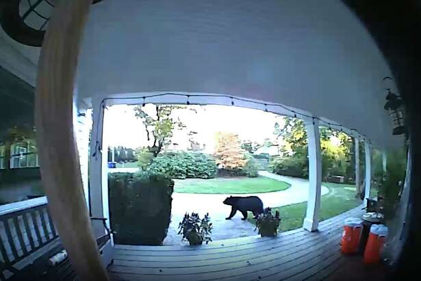 This bear was spotted going across a front yard on Shadow Lane Saturday afternoon.