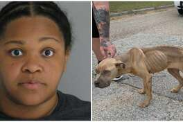 An animal cruelty investigation has been launched after police say a Houston woman allegedly threw an apparently malnourished puppy out of her window and onto a road in the Atascocita area Sunday and then fled the scene.