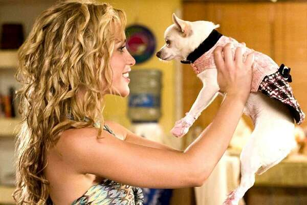 #93. Beverly Hills Chihuahua (2008) Directed by Raja Gosnell - IMDb user rating: 3.8 - Votes: 21,190 - Metascore: 41 - Runtime: 91 min Drew Barrymore voices the eponymous canine, and Piper Perabo plays the woman assigned to dogsit. In one sequence, the chihuahua deposits dog food in her sitter's shoes. This reveals a conspicuous mistake since the same shoes were just on feet, then off, and next, located across the room in a prime spot for the doggy prank, but at the expense of sacrificing spatial logic. This slideshow was first published on theStacker.com