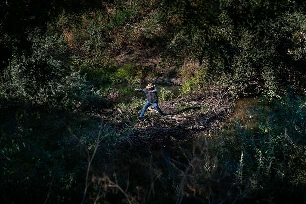 Farmer Tom Gamble hops from a beaver dam that was formed when farmers gave up some land to allowed the natural flow of the Napa River on Saturday, Oct. 5, 2019, in Napa, Calif.