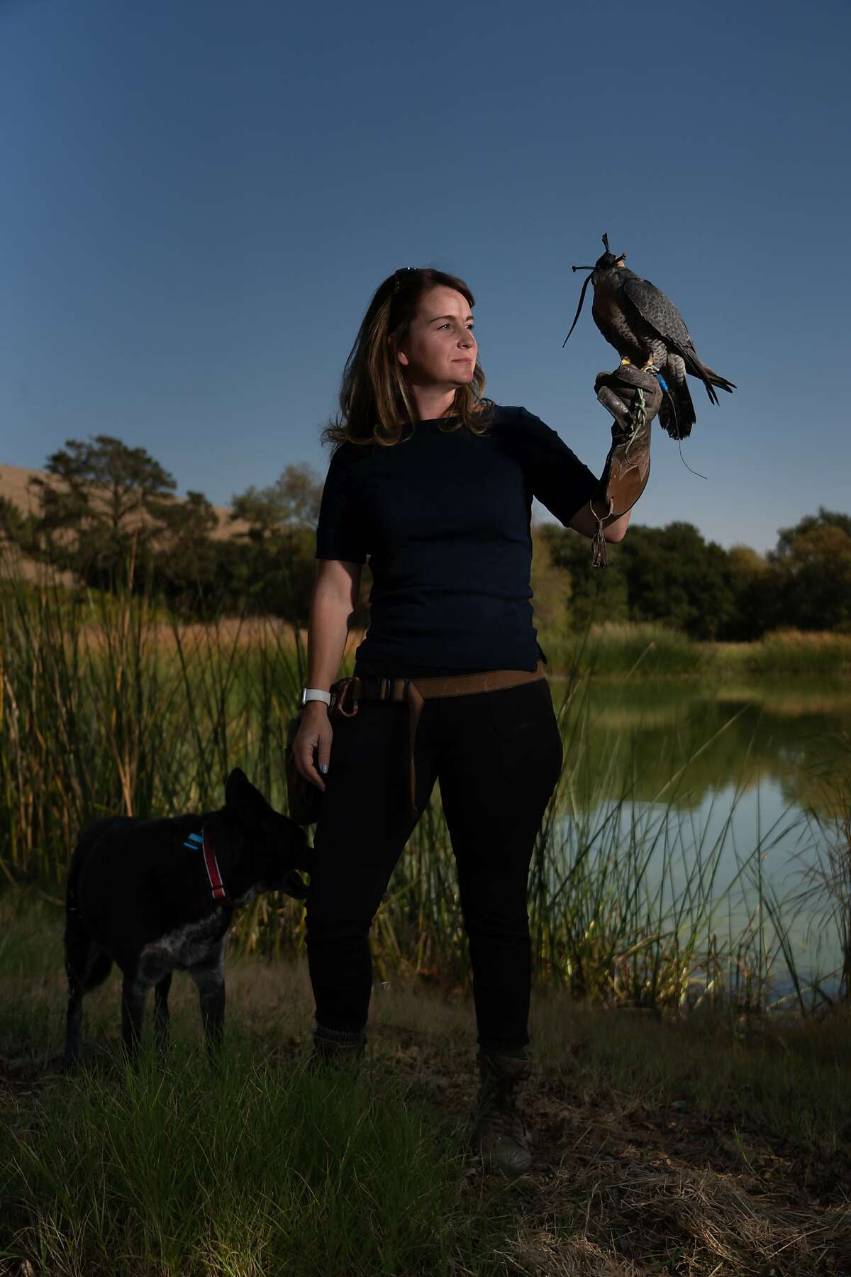 Rebecca Rosen holds Rambo, a peregrine falcon, on Saturday, Oct. 12, 2019, in Napa, Calif.