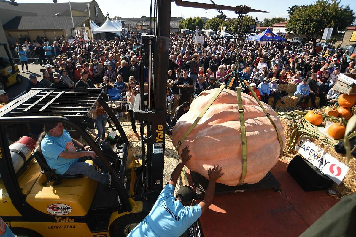 The 1727 pound Atlantic Giant pumpkin grown by John Hawkley from Napa is weighed in front of the crowd during the Safeway World Championship Pumpkin Weigh-off on October 14, 2019 in Half Moon Bay, CA.