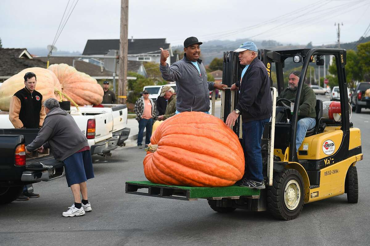 Asuncion Gijon, left, and Leroy Teixeira ride on a forklift driven by Dan Mello, all from Half Moon Bay, as they volunteer to help weigh and measure the giant pumpkins, including one grown by Art Martinez of Fremont before the Safeway World Championship Pumpkin Weigh-off on October 14, 2019 in Half Moon Bay, CA.
