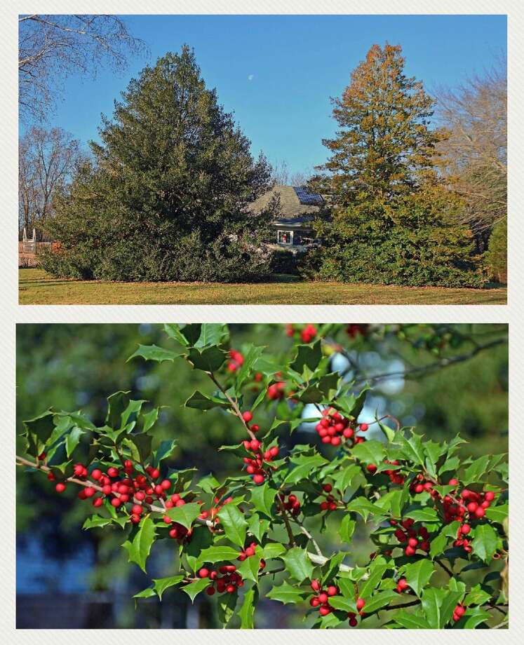 The Notable Trees for December