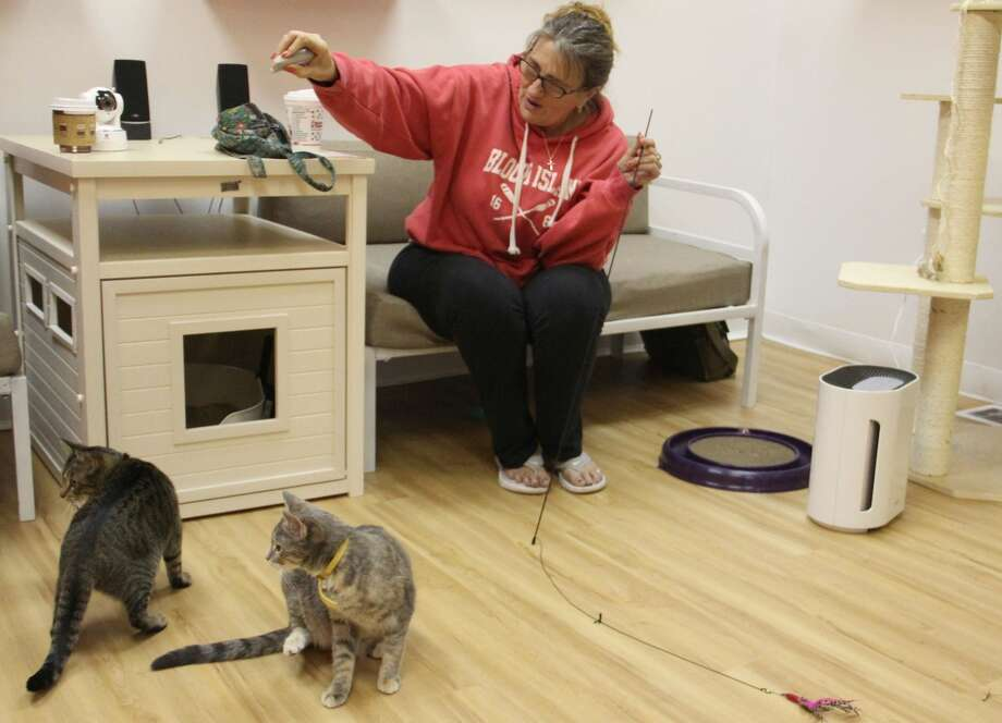 Tammi Meyers, of Middletown, visits the Mew Haven Cat Cafe in New Haven on Tuesday afternoon.